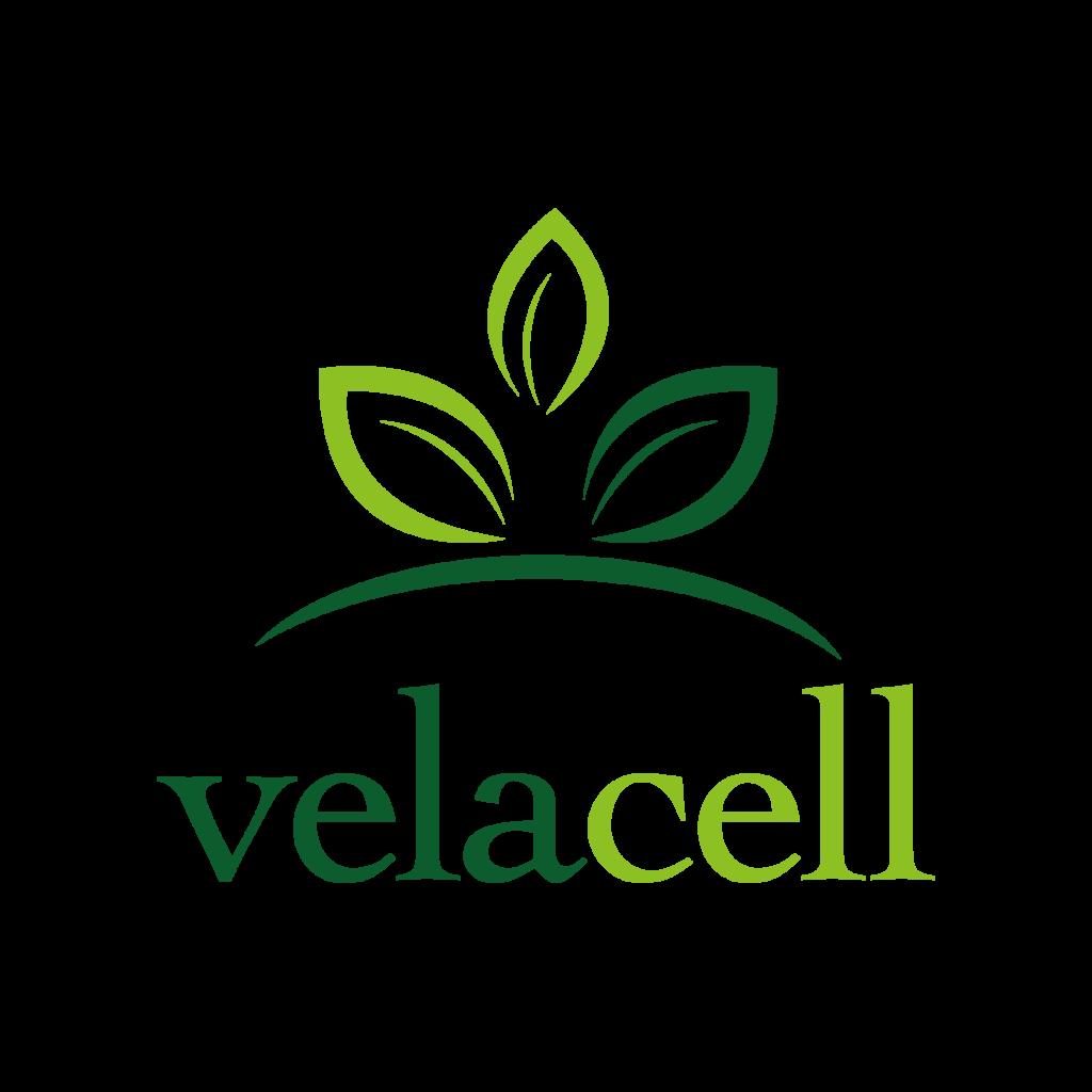 velacell moringa und ayurvedische kräuter